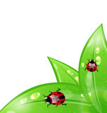 Ecology background with ladybugs on leaves Royalty Free Stock Photo