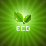 Ecology Background With Leaves And ECO Title Stock Photography