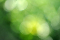 Ecology bokeh background Stock Images