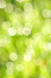 Ecology bokeh background Royalty Free Stock Photo