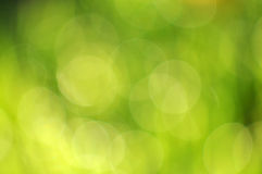 Ecology bokeh background Stock Photos