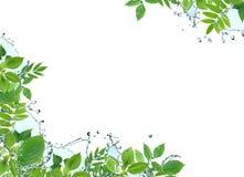Ecology Border Royalty Free Stock Image