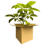 Ecology box plant Stock Photo