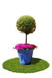 Ecology card. With tree in flowerpot, flowers isolated on white Stock Photography