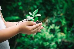 Ecology concept child hands holding plant a tree sapling with world environment day. Ecology concept child hands holding plant a tree sapling with on ground royalty free stock photos