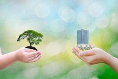 Ecology concept child human hands holding big plant tree building with on blurred background. World environment royalty free stock photo
