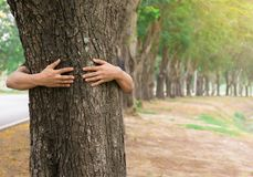 Free Ecology Concept Hand Man Hug Tree Love Forests Trees Stock Images - 113376484