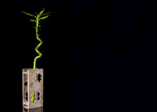 Ecology concept image with bamboo stem in wooden vase on black background Royalty Free Stock Photo
