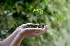 Ecology concept . Plant on boy hand and nature background , Ecology concept Royalty Free Stock Photos