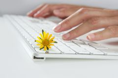 Ecology concept of woman hands typing keyboard. Ecology concept of woman hands typing a keyboard with flowers Royalty Free Stock Images