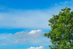 Branches of Tree with Leaves Against on The Sky Stock Photo