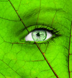 Ecology conceptual image with green human eye Royalty Free Stock Photography