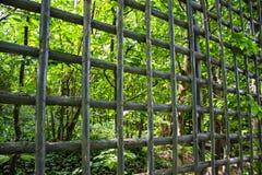 Ecology. Depression, ecology, bamboo in garden Royalty Free Stock Image