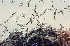 Ecology disaster, seagulls flying over a landfill Stock Photo