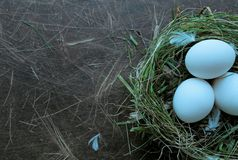 Ecology eggs in a nest Royalty Free Stock Images