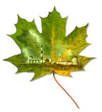 Ecology Environment Royalty Free Stock Photo