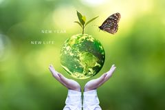 Ecology and Environment Earth.  Planet and tree with butterfly in human hands over green nature ecology, Save the earth concept,