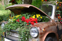 Ecology, Flowers under the hood of an old car Royalty Free Stock Images
