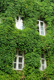 Ecology-friendly house. A green ecology-friendly house in tree leaves Stock Photography