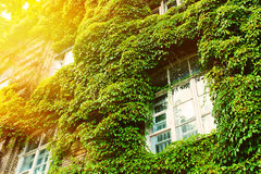 Ecology-friendly house. A green ecology-friendly house in tree leaves Royalty Free Stock Photo