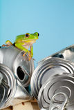 Ecology frog. Ecology or environment image of a white-lipped tree frog on garbage Stock Photo