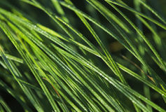 Ecology and grass Royalty Free Stock Photos