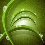 Ecology Green Background Stock Image