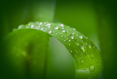 Ecology green background Royalty Free Stock Image