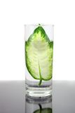 Ecology -green leaf in glass of water. Royalty Free Stock Photo