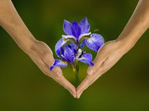 Ecology, hands, responsibility. Business,  human Royalty Free Stock Image