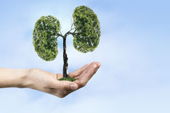 Ecology and health concept Stock Photography