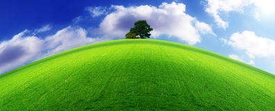 Ecology horizon. A lush green meadow with a tree at the horizon Royalty Free Stock Image