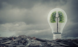 Ecology ideas. Ecology concept with green tree inside of light bulb Royalty Free Stock Images