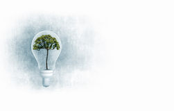 Ecology ideas. Ecology concept with green tree inside of light bulb Royalty Free Stock Photos