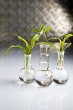 Ecology laboratory experiment royalty free stock photography