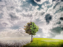 Ecology landscape. (desert and prairie) and half a green tree Stock Image