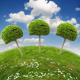 Ecology landscape. Funny landscape with beautiful trees and camomile Royalty Free Stock Images