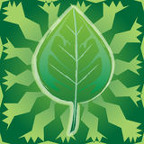 Ecology-Leaf Stock Image