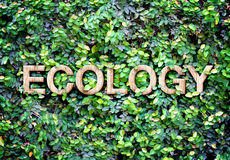 Ecology made of wood word on leaves wall,Eco concept Royalty Free Stock Image