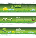 Ecology nature background Royalty Free Stock Photography