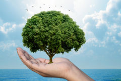 Ecology Nature protection concept showing a human hand holding a  tree with nature background. Royalty Free Stock Photos