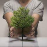 Ecology, Protect Nature. Stock Photo