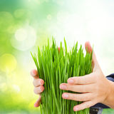 Ecology protection concept. Hands holding green grass on green garden bokeh background Stock Photos