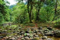 Ecology scene. Beautiful ecology scene; plants and river Stock Photo