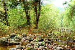 Ecology scene. Beautiful ecology scene; river and trees Stock Image