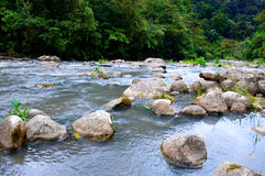 Ecology scene. Beautiful ecology scene; river and plants Stock Photo