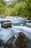 Ecology scene / river flow Royalty Free Stock Image