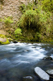 Ecology scene / river flow Royalty Free Stock Photo