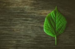 Ecology sign, green leave. On wooden background royalty free stock photography