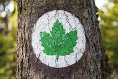 Ecology symbol - Green leaf sign Stock Image